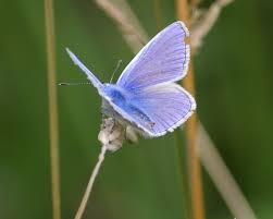 look no three small butterflies