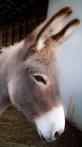 293 best animal de la ferme images on pinterest animals country