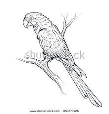 macaw parrot ara illustration coloring stock illustration
