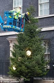 how to hang lights on a christmas tree number 10 workers hang lights on tree outside david cameron s