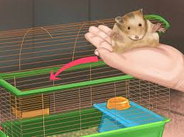 How Much Is A Hamster Cage 3 Ways To Give Your Hamster A Bath Wikihow