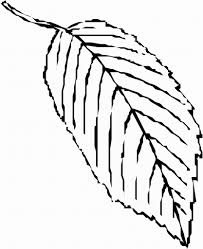 fall leaf free coloring pages on art coloring pages