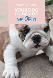 How To Train For Stair Climb by Tips And Tricks For Training A Dog To Use Pet Steps Stairs And Ramps
