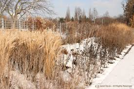 winter piet oudolf designed entry border toronto botanical garden