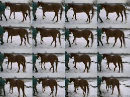 Horn And Hoof Flag Treating Navicular Syndrome Without Horseshoes Full Sized Photos