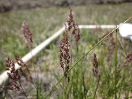 california native plant society blog emma williams clm internship program blog