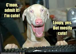 Silly Dog Meme - i has a hotdog silly dog funny dog pictures dog memes puppy
