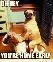 Oh You Dog Meme - oh hey you re home early you re home early pinterest