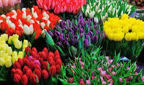fresh flowers flower arrangements margaret mchenry