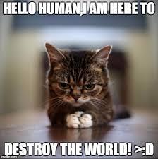 Lil Bub Meme - image tagged in evil lil bub imgflip
