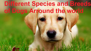 different species and breeds of dogs around the world banned