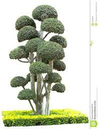 ornamental bushes angeloferrer