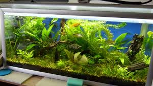 aquatic plants without co2 growing up out of aquarium 720p youtube