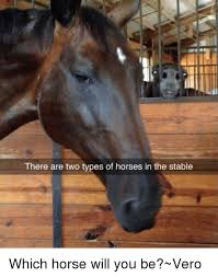 Horse Head Meme - there are two types of horses in the stable which horse will you