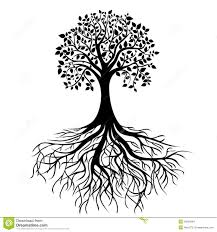 tree with roots and dense foliage vector stock vector