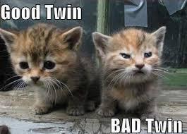 Grumpy Cat Meme Good - good vs evil twins grumpy cat meme see funny images photos