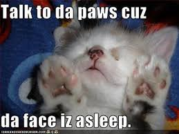 Working Cat Meme - rise and grind working out in the am eat run and everything