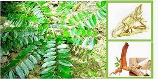 4 ramuan herbal obat kuat yang bikin pria bisa tahan 2 jam diatas