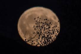 what is the harvest moon i u0027m seeing in the sky tonight the san