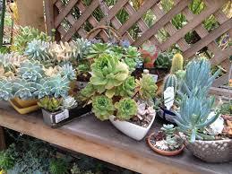 download succulent gardens in pots solidaria garden succulent