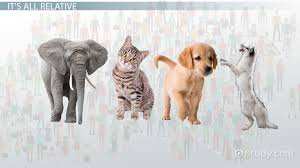 placental mammals definitions characteristics u0026 examples video