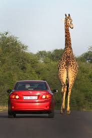 quotes for car insurance in south africa raipurnews