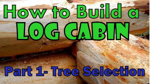 how to build a cheap cabin how to build a log cabin part 1 selecting the right tree youtube
