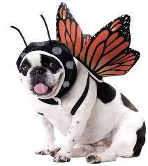 Pet Halloween Costumes Dogs 86 Dog Costumes Halloween Images Animals