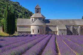 chambre de commerce avignon chambre de commerce avignon senanque lavender fields 1000 662