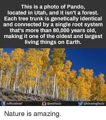 Tree Trunks Meme - 25 best memes about tree trunk tree trunk memes