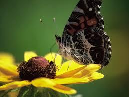 bring butterflies to your garden scliving coop