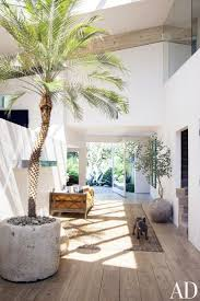 best 25 indoor palms ideas on pinterest big indoor plants