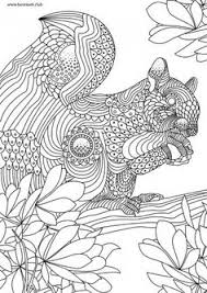 mandarin duck coloring book page zentangle doodle coloring