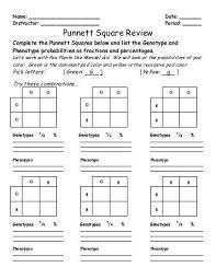 punnett square practice worksheet free worksheets library