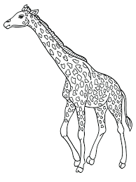 lion lioness coloring pages king baby giraffe realistic