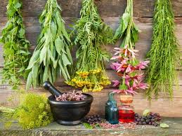 herbal garden 12 healing herbs you need to grow in your medicinal garden
