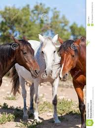 Group Of Horses Outside Horse Ranch In Summer Stock Images Image