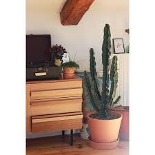 le de bureau deco un cactus géant a rejoint le bureau de ohpawshop depuis quelques