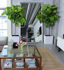 best indoor house plants best indoor house plants for your living room