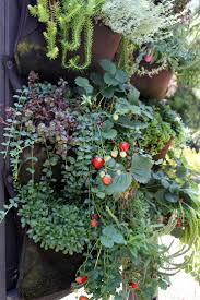 88 best edible walls images on pinterest gardening vertical