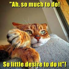 Kitty Meme - so much to do so little desire to do it snarky pet humor funny