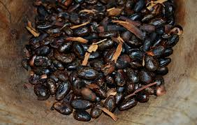 native american plants used for medicine medicinal and ritualistic uses for chocolate in mesoamerica