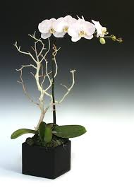 orchid arrangements orchid arrangements orchids send orchids eastern leaf
