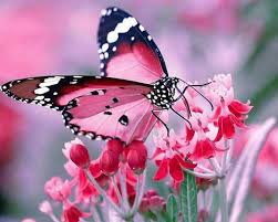 butterfly is another beautiful way around the earth steemit