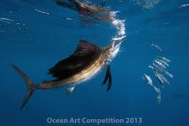 2013 ocean art contest winners underwater photography guide