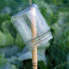 to hold up protective netting small jar is great idea to prevent