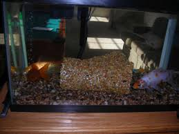 diy aquarium decorations petdiys com