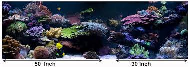 Aquascap Aesthetics Of Aquascaping Part I Reefs Com