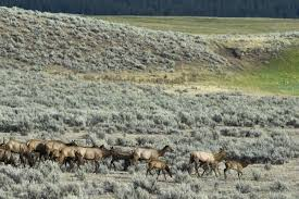 Montana Hunting Maps by Elk Shoulder Seasons Open In Montana Natural Resources News Feed