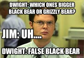 Dwight Meme - dwight which ones bigger black bear or grizzly bear jim uh